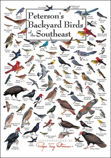 foldingguides.com - Peterson's Backyard Birds of the ...