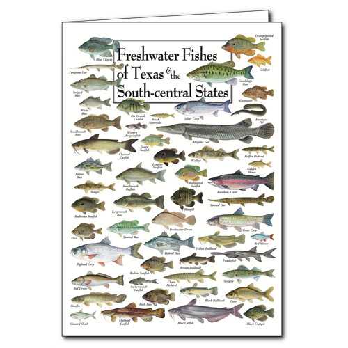 Freshwater Fishes Of Texas The South Central States Poster Card Set 6 Greeting Cards
