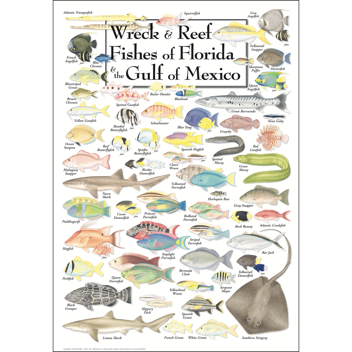 Wreck reef fishes of florida the gulf of mexico for Types of fish in the gulf of mexico