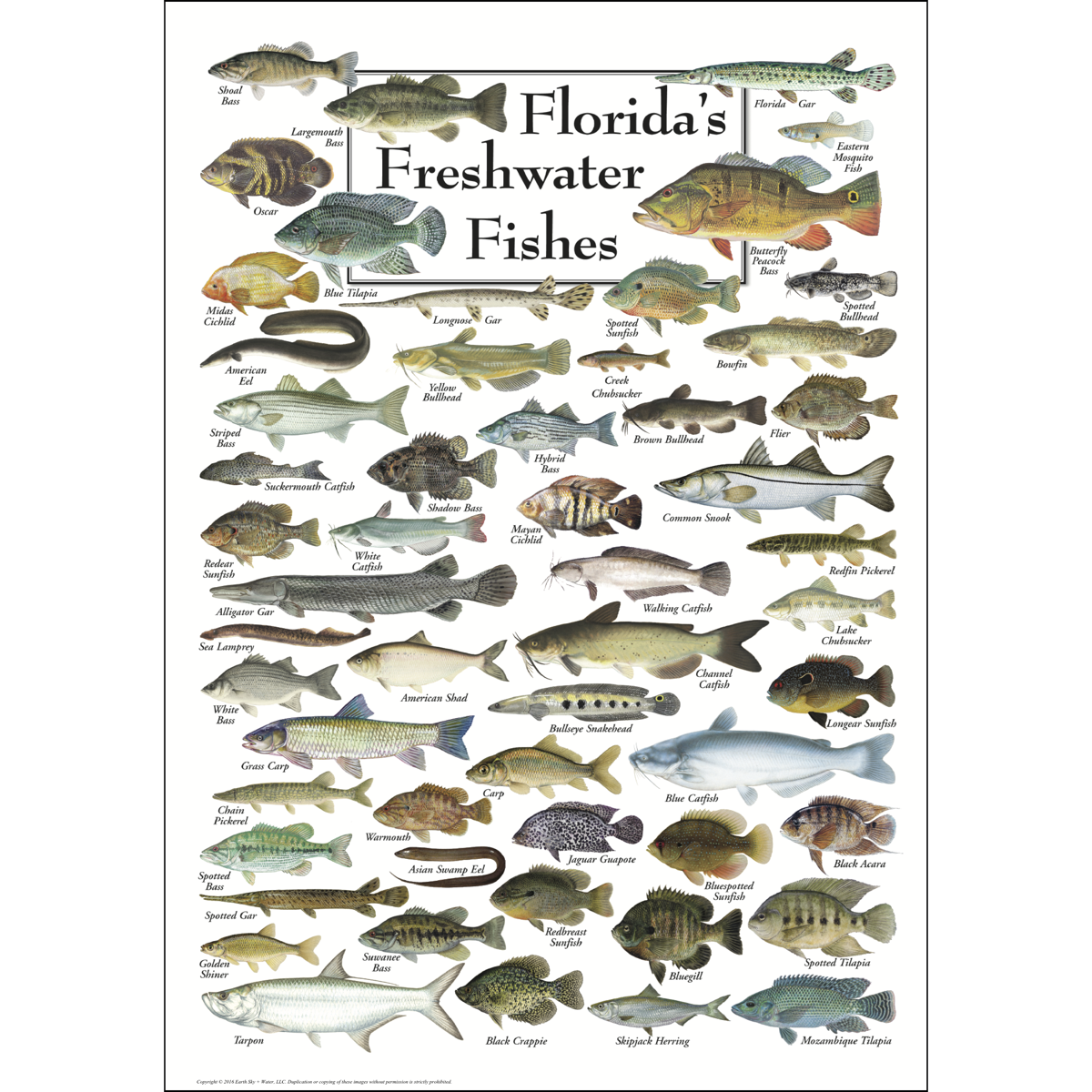 florida s freshwater fishes poster earth sky water