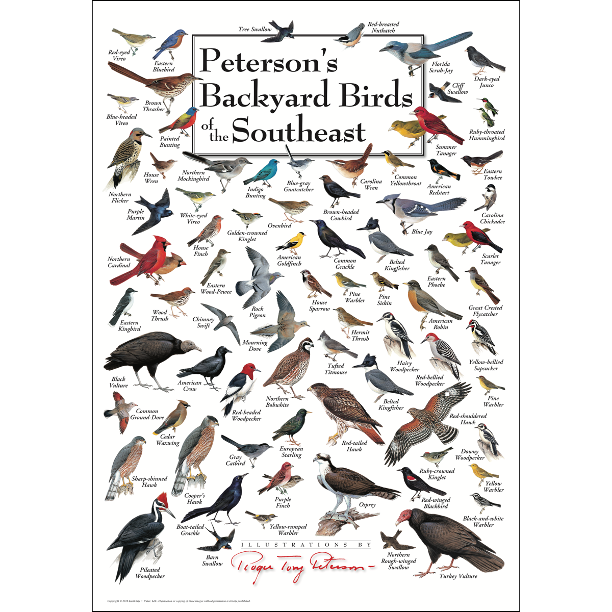 Peterson's Backyard Birds of the Southeast - Poster ...