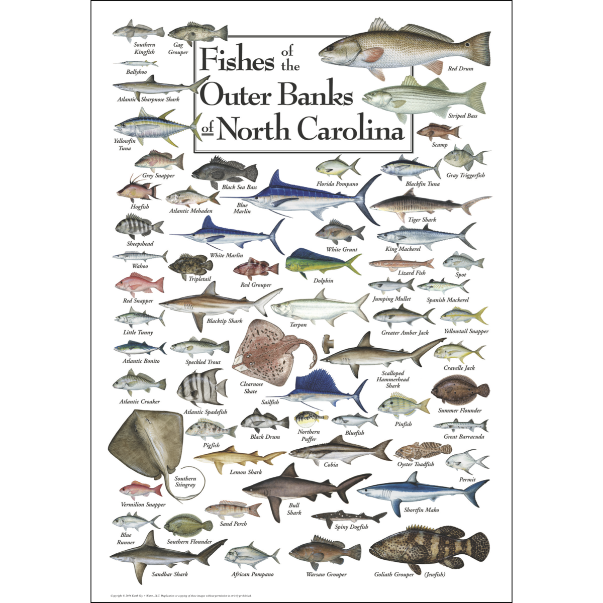Fishes of the outer banks poster earth sky water for South carolina freshwater fish