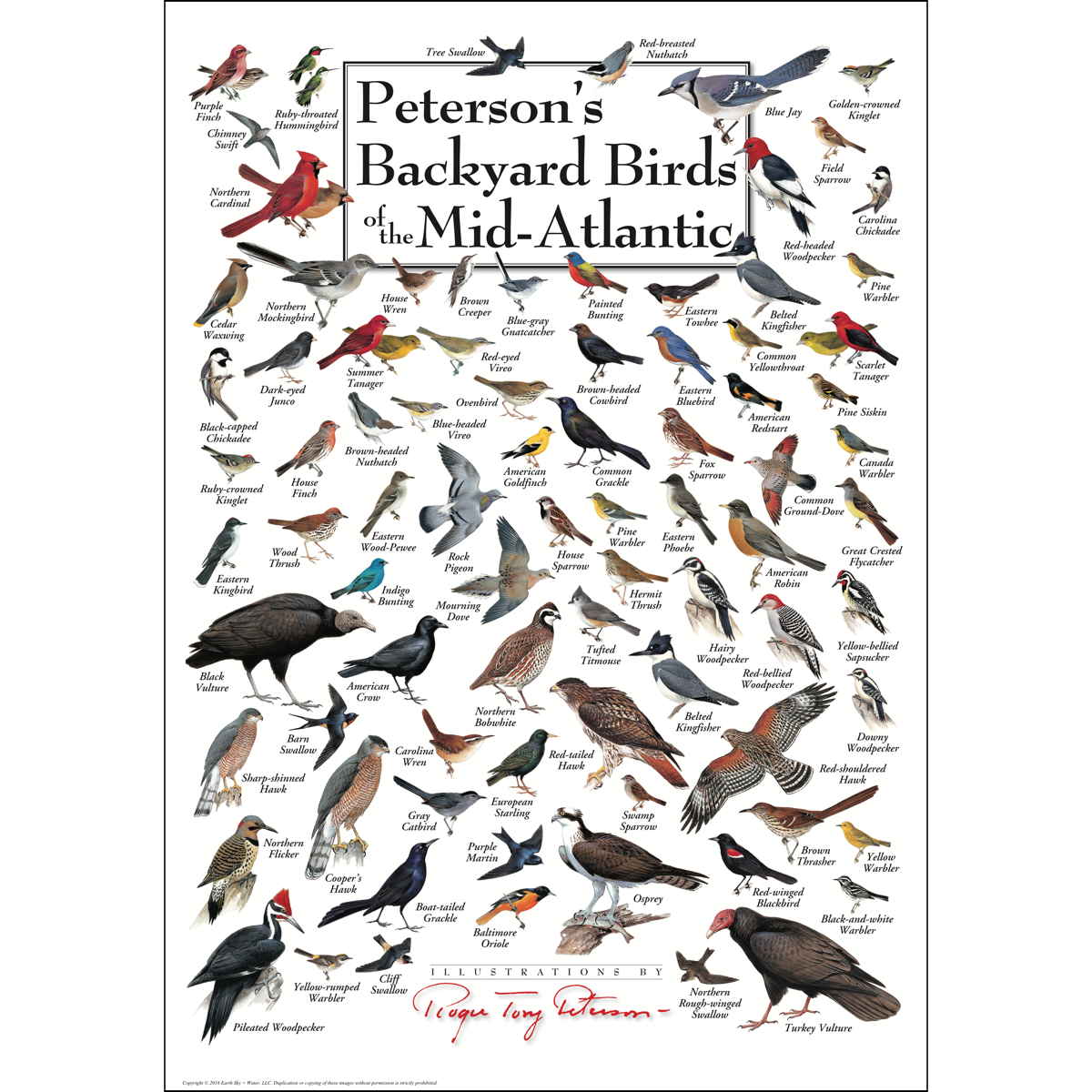 Peterson's Backyard Birds of the Mid-Atlantic - Poster ...