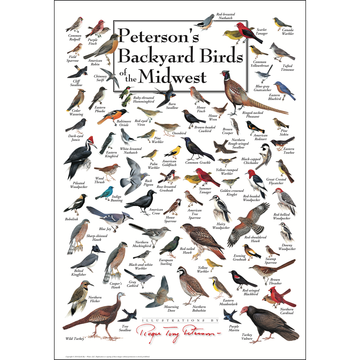 Peterson's Backyard Birds of the Midwest - Poster - Earth ...