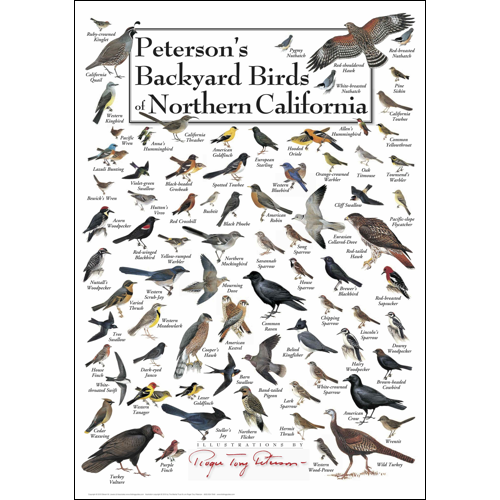 Peterson's Backyard Birds of Northern California Poster ...
