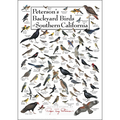 Peterson's Backyard Birds of Southern California Poster ...