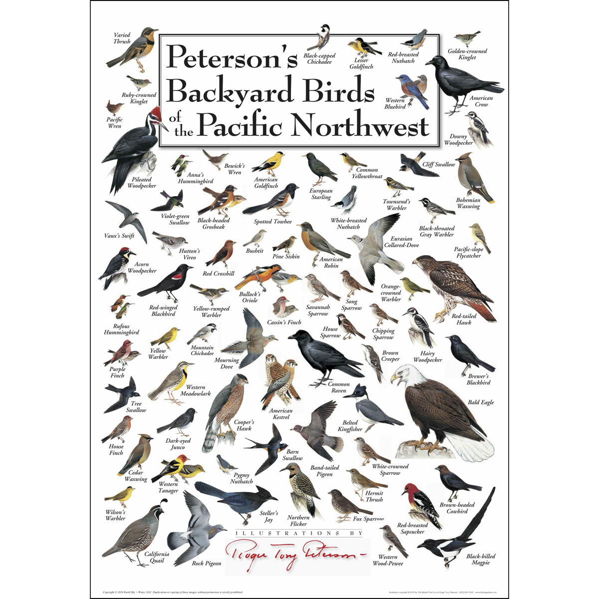Peterson's Backyard Birds of the Pacific Northwest ...