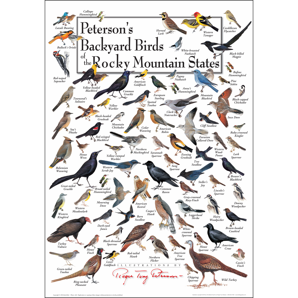 Peterson's Backyard Birds of the Rocky Mtn States - Poster ...