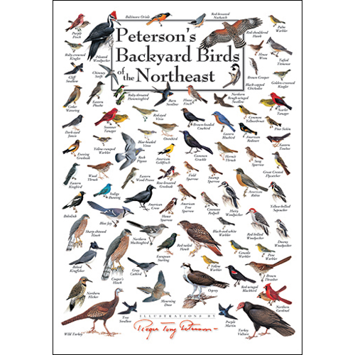 Peterson's Backyard Birds of the Northeast(Set of 6 ...