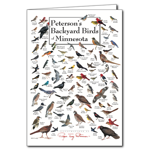 peterson s backyard birds of minnesota poster card set of 6 rh foldingguides com peterson's backyard birds of the midwest peterson's backyard birds of the southeast