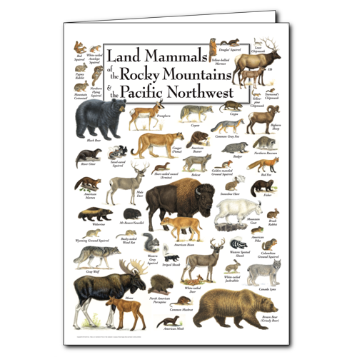 Land mammals of the rocky mountains the pacific for Wildlife christmas cards 2016