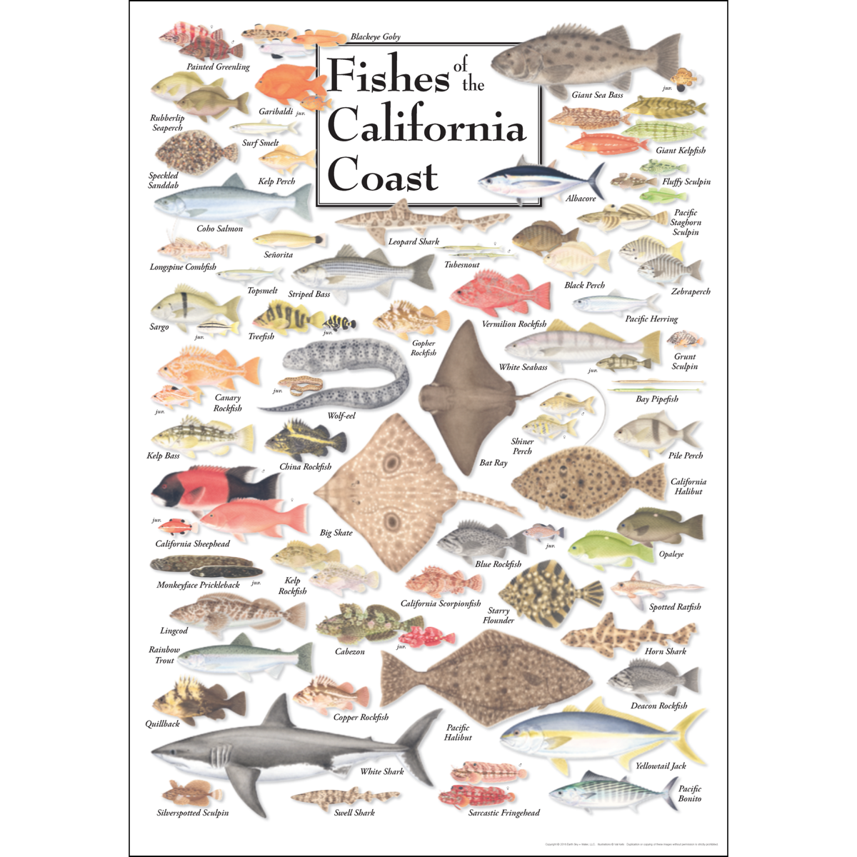 Fishes of the california coast poster earth sky water for California fishing guide