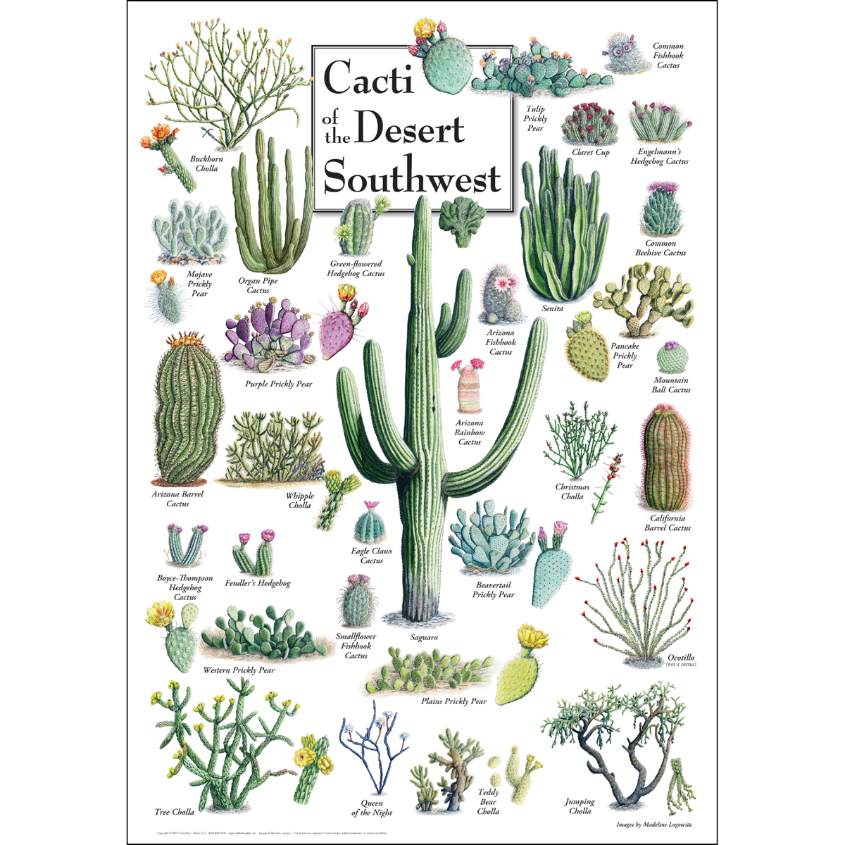 Cacti Of The Desert Southwest Poster New Earth Sky Water