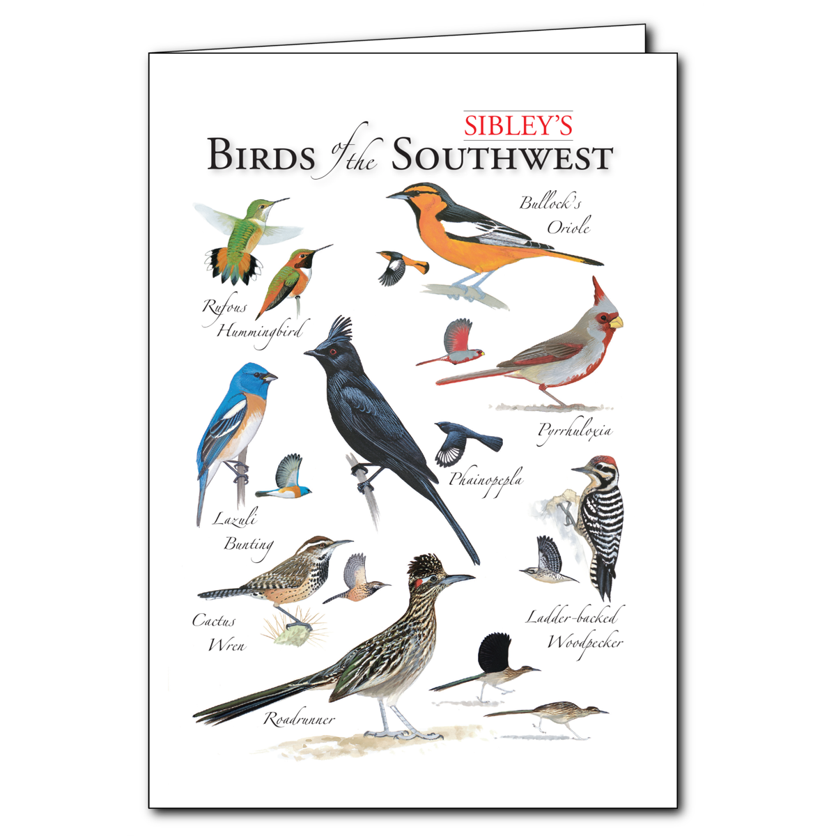 Sibleys Birds Of The Southwest Regional Cardset Of 6 Greeting