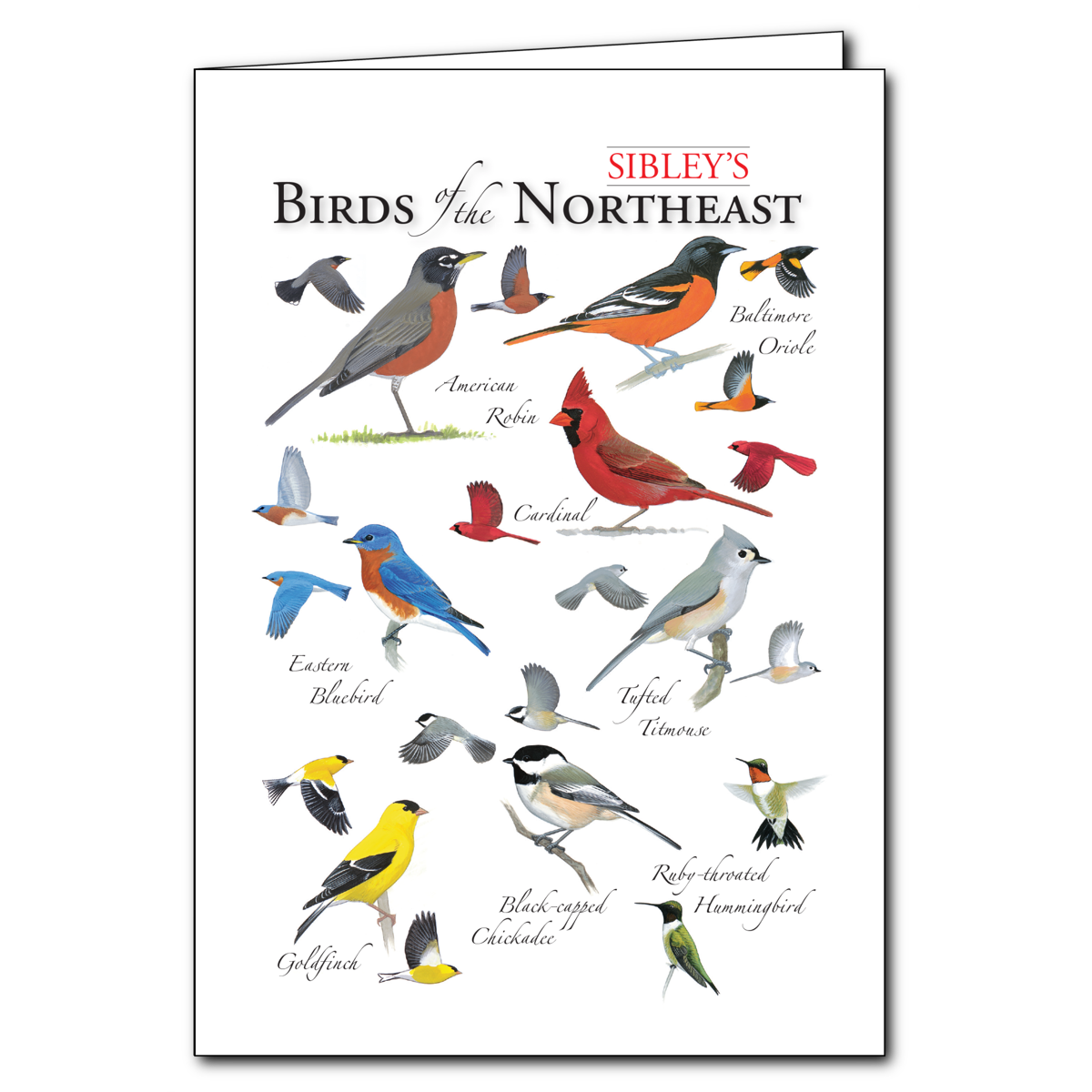 Sibleys Birds Of The Northeast Regional Cardset Of 6 Greeting