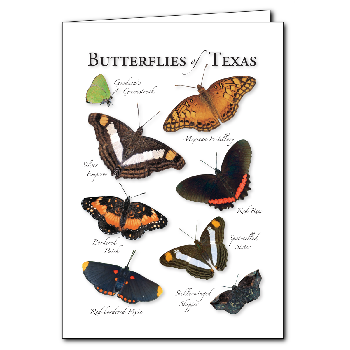 Butterflies of texas regional cardset of 6 greeting cards new butterflies of texas regional card set of 6 greeting cards new m4hsunfo