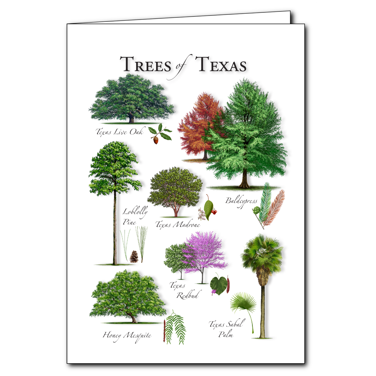 Trees of texas regional cardset of 6 greeting cards new trees of texas regional card set of 6 greeting cards new m4hsunfo