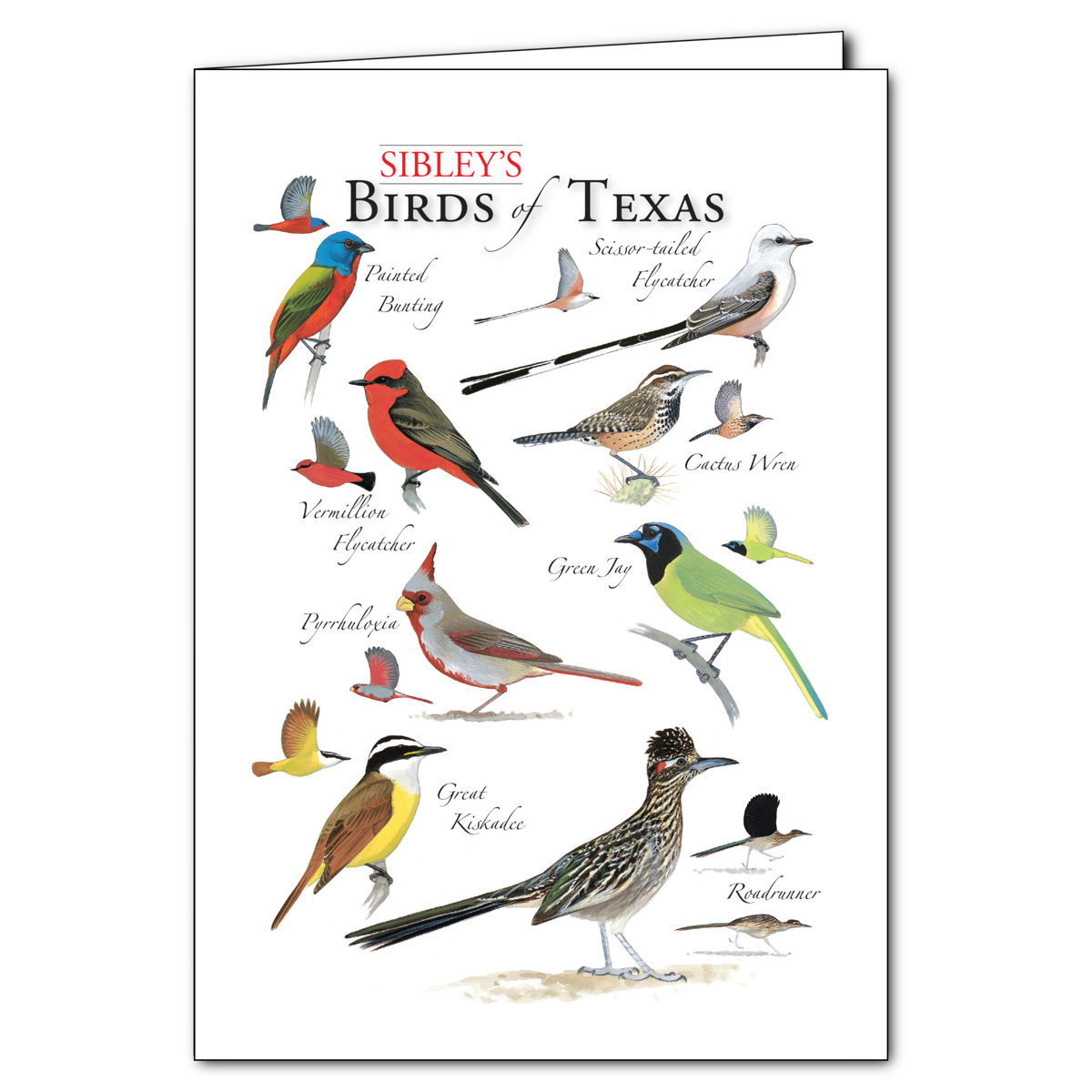 Sibleys birds of texas regional cardset of 6 greeting cards sibleys birds of texas regional card set of 6 greeting cards new m4hsunfo