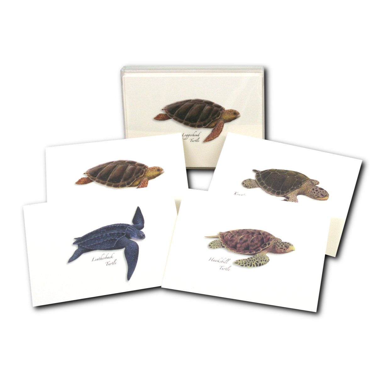 2 Each of 4 Styles Earth Sky Water 8 Blank Cards with Envelopes Sea Turtle Hatchling Assortment Notecard Set