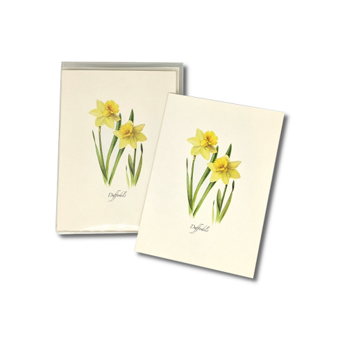 A box of Daffodil notecards