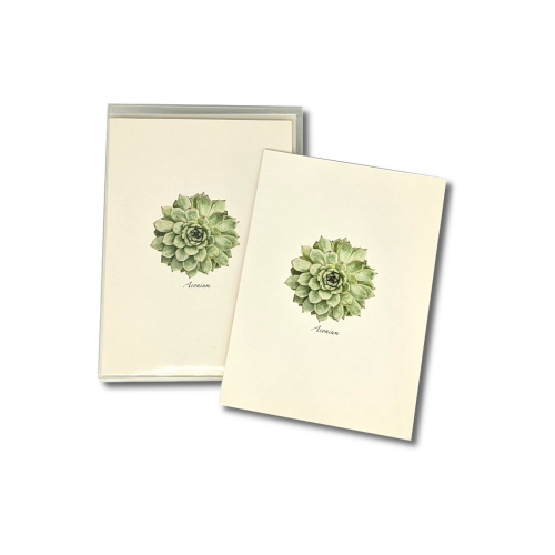 A box of Succulent notecards