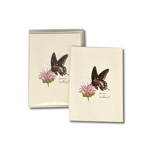 A box of Spicebush Swallowtail notecards