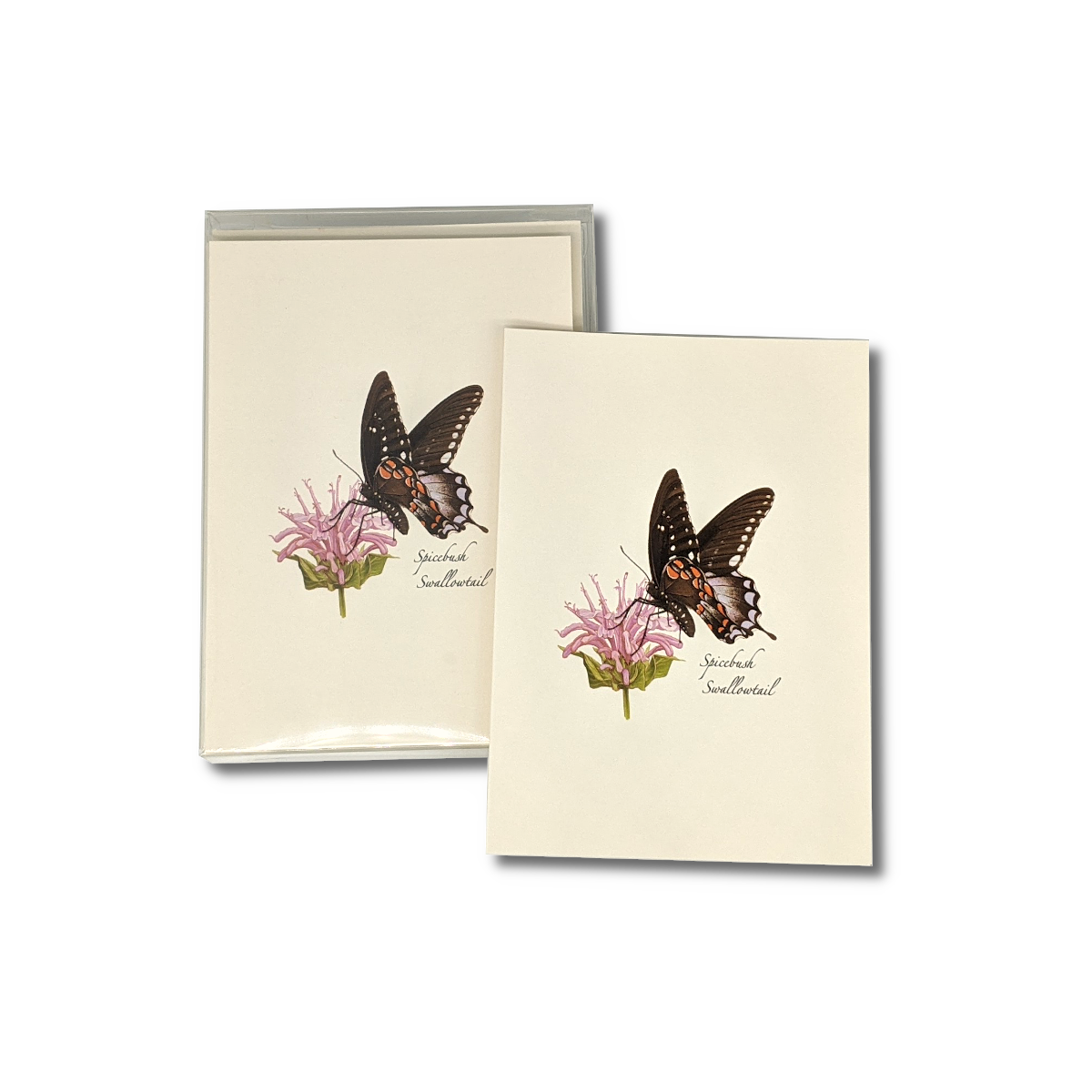 A box of Spicebush Swallowtail notecards