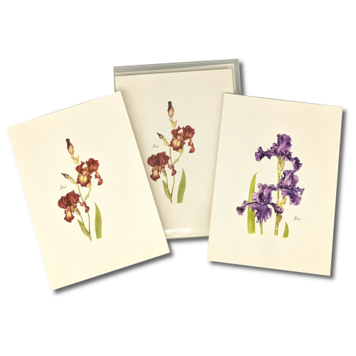 A box of Purple and Red Iris notecards